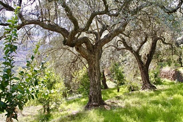 The private park of the La Esperanza boutique hotel in Granada is full of organic fruit trees