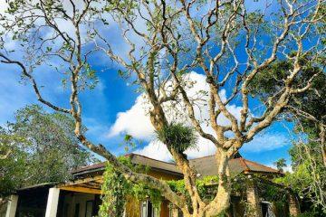 The homes of Geoffrey Bawa and Bevis Bawa in Sri Lanka