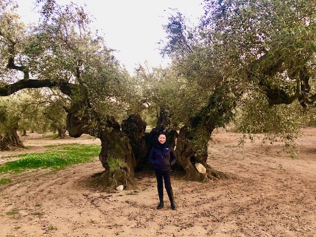 The ancient olive trees of Spain