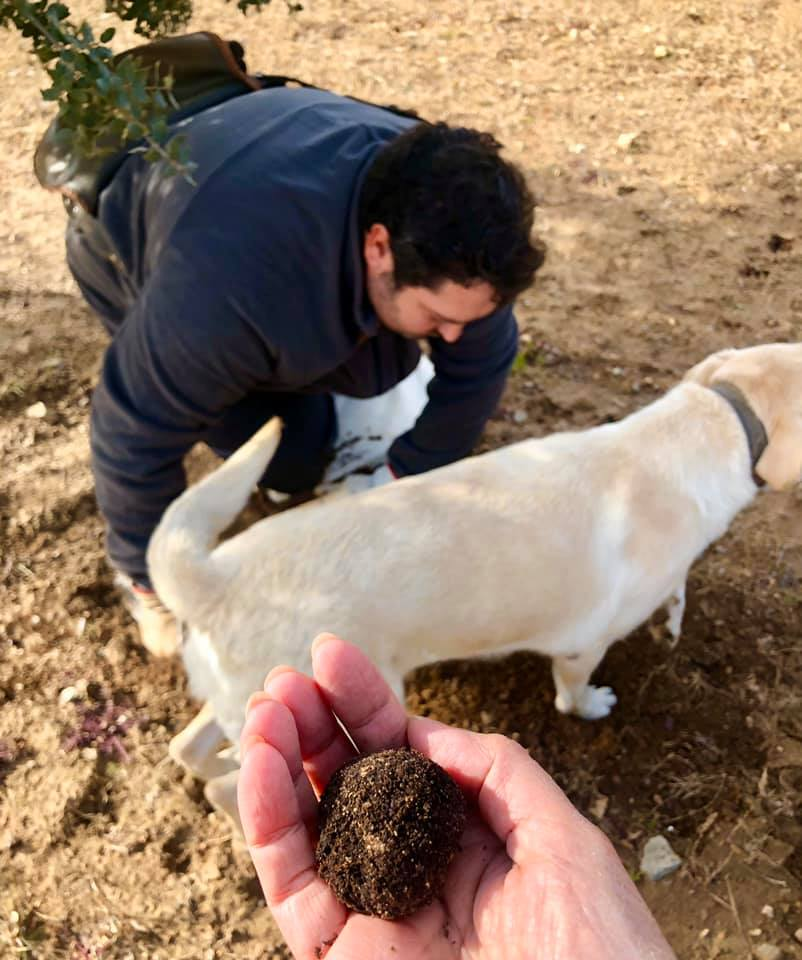 Hunting for black truffles in Mora de Rubielos in Spain