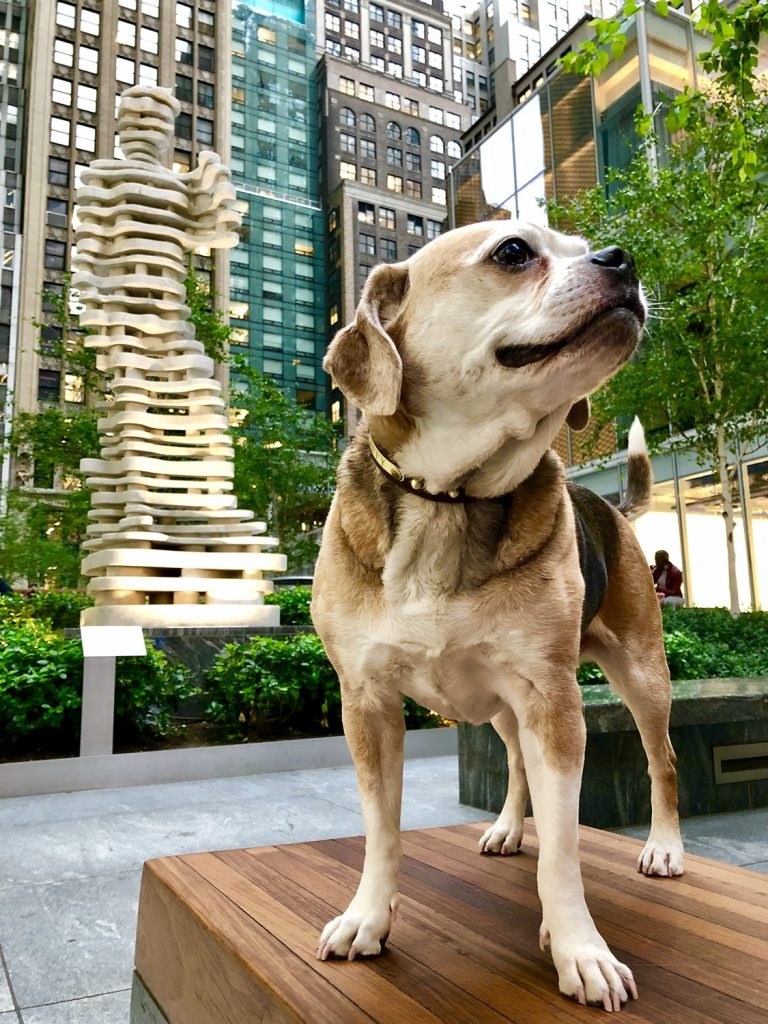 A French beagle named Taffy who lives in Manhattan is best guide in New York. She hangs around Central Park, Saks Fifth Avenue and the NYPD.