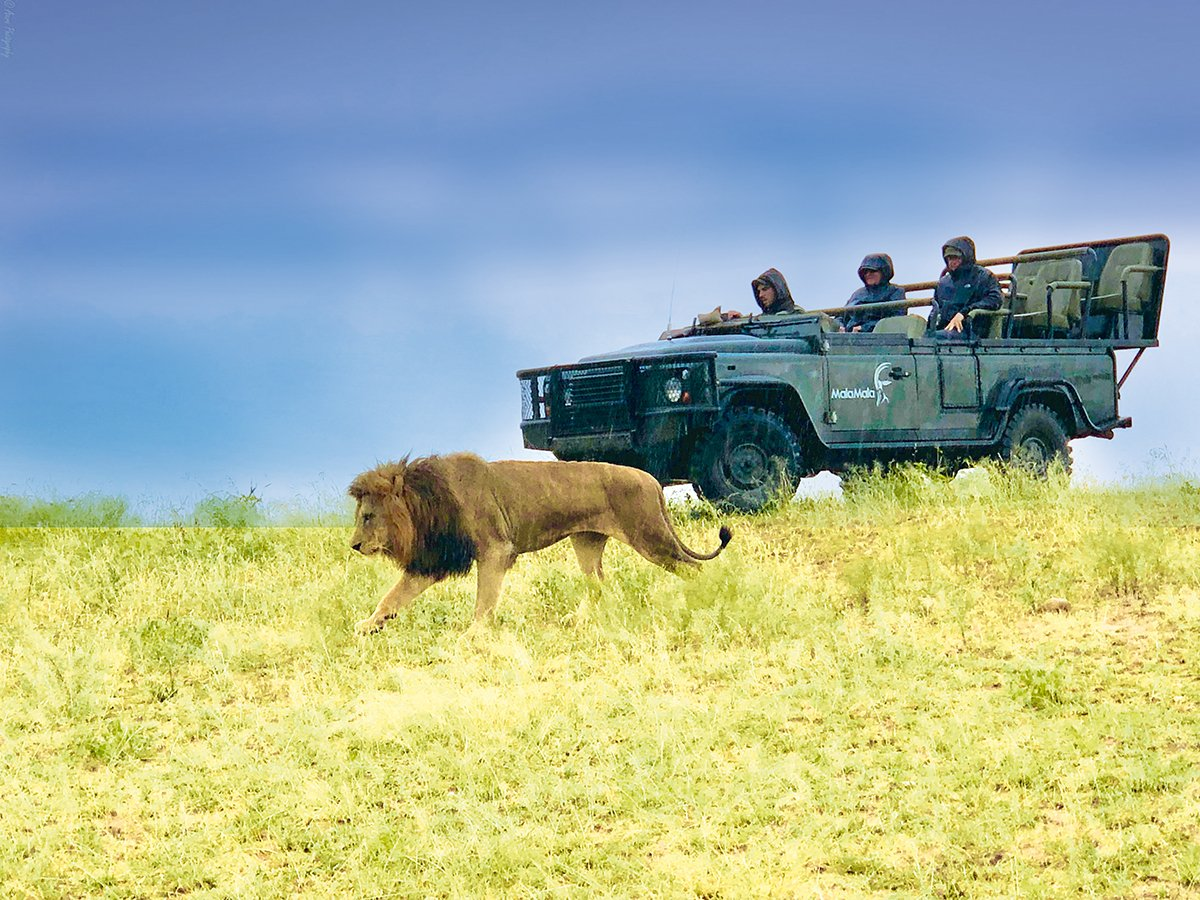 MalaMala : the real luxury safari in Africa