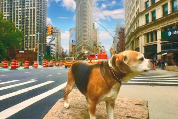 Taffy The Best Guide in New York